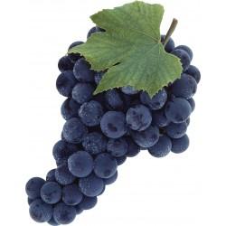 Vinič bezsemenný VENUS