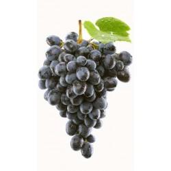 Vinič NERO