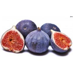 Severský figovník PERETTA