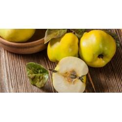Dula jablková RONDA
